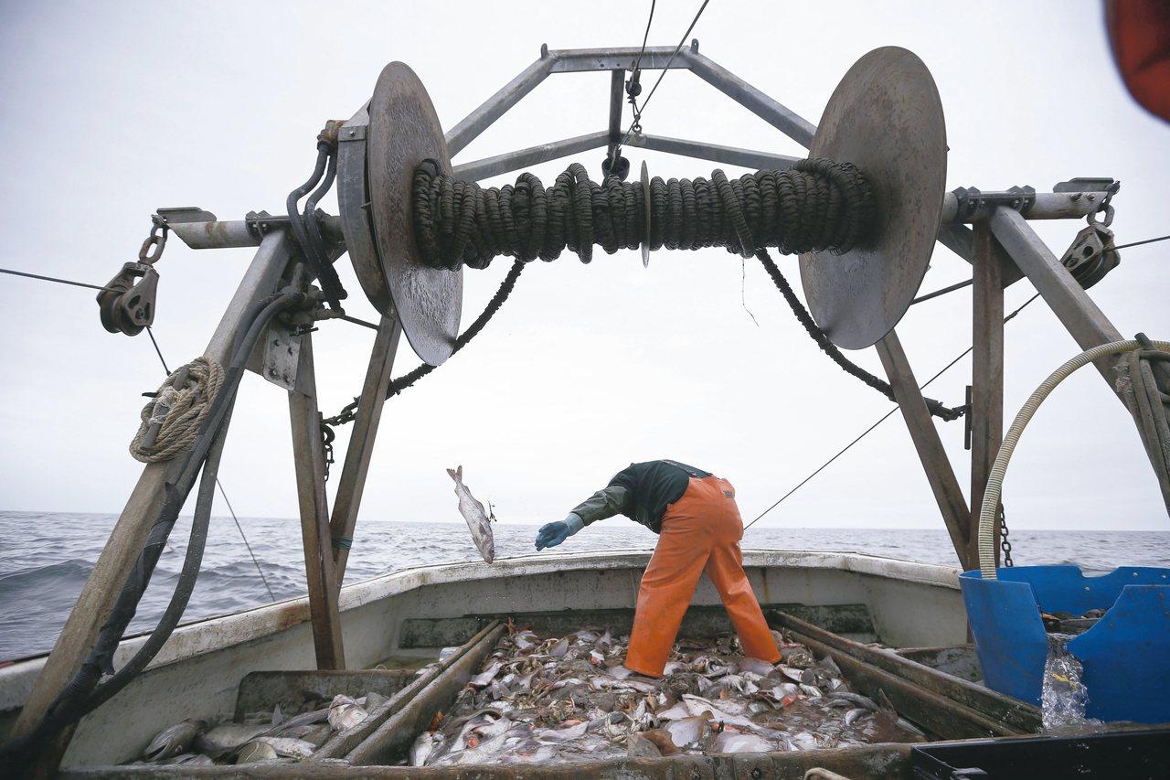 澳洲今年海鮮食品銷售量成長近一成,圖為美國漁民整理漁獲。 圖/美聯社