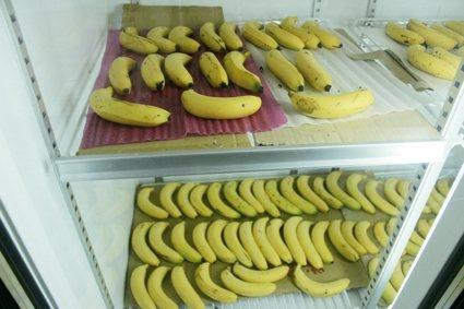 香蕉品質實驗室 圖/朱慧芳
