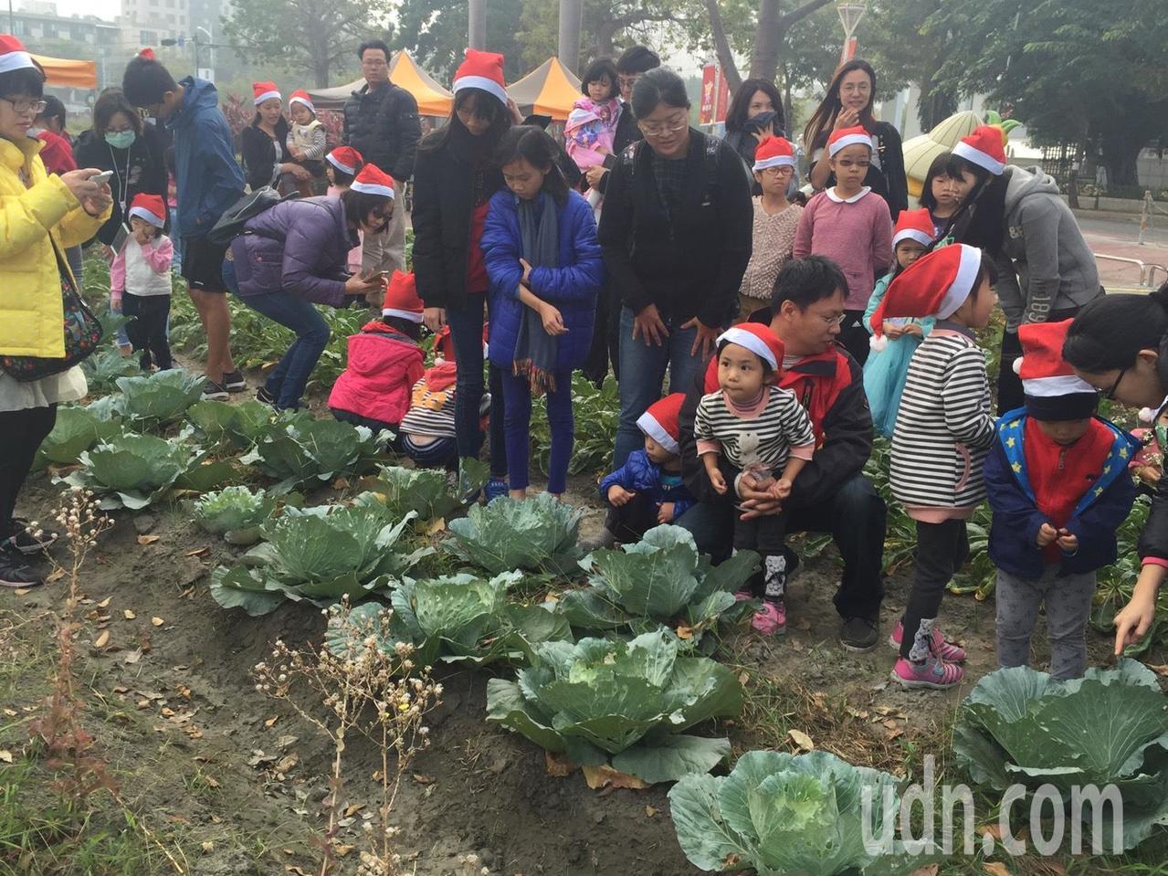 今天有數餘位載耶誕老人紅帽的小農夫穿梭田間,幫忙拔蘿蔔、採蕃茄、挖地瓜及摘玉米,...