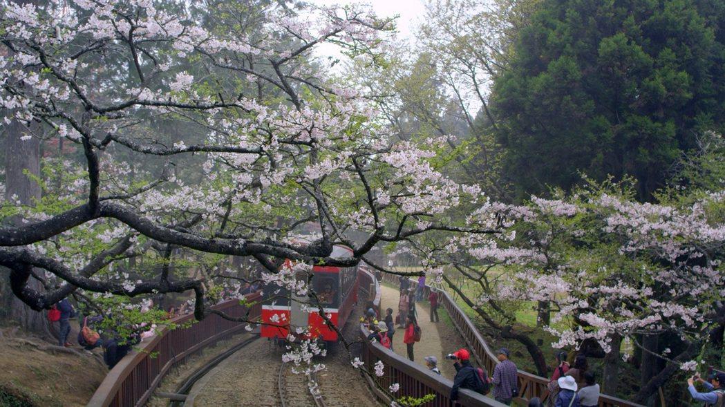 「美力台灣3D」是台灣第一部非演唱會全3D紀錄片。圖為阿里山小火車。圖/牽猴子提...
