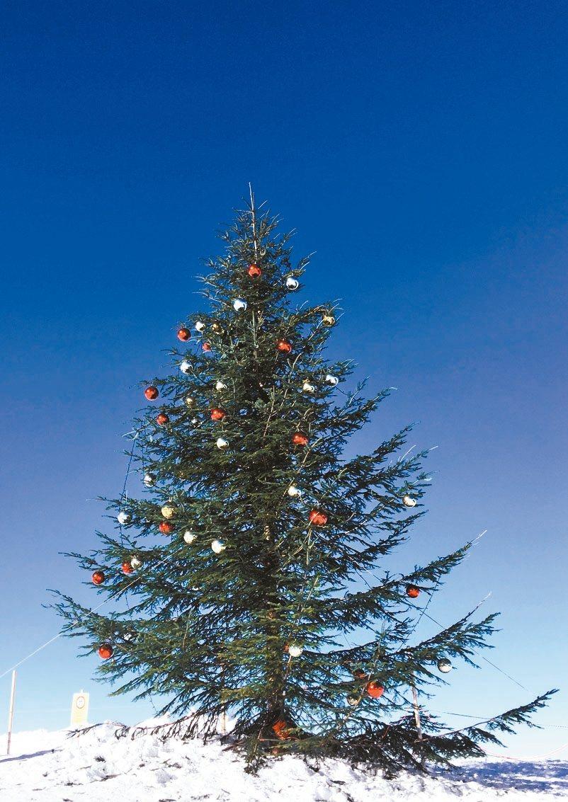 少女峰山上的耶誕樹是遊客必拍的浪漫地標。 記者許晉榮/攝影