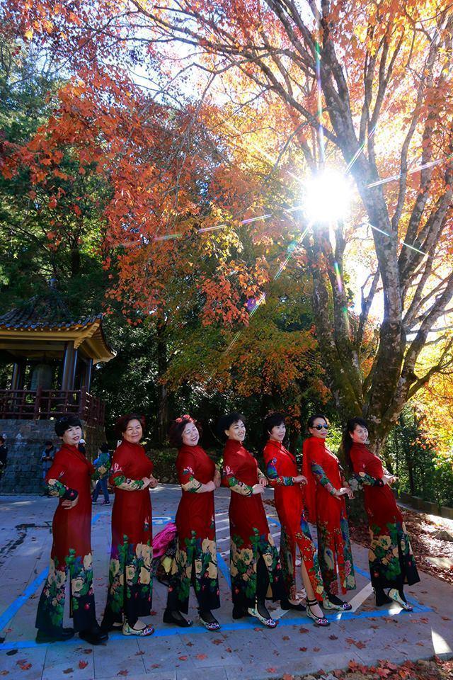 陸客團讚賞阿里山的楓情萬種。圖/黃春榮提供