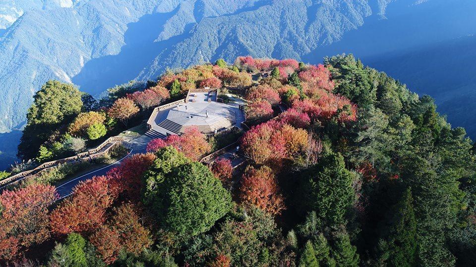 小笠原山八角亭(觀景平台)的紅榨槭已紅翻了。圖/嘉義林區管理處提供