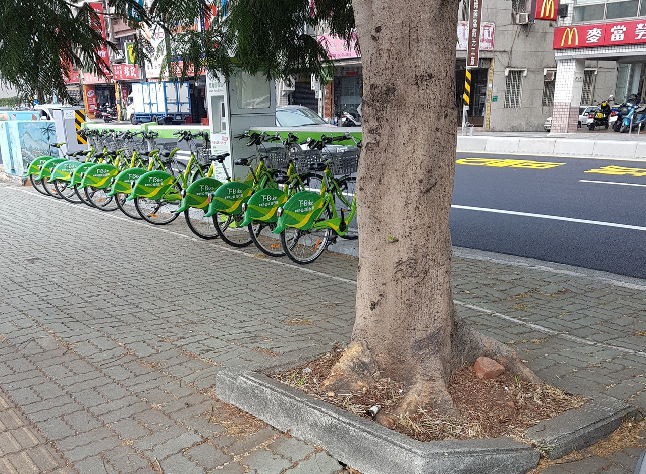 台南市健康路上路樹竄根,地面凹凸不平,但解決困難。 記者修瑞瑩/攝影