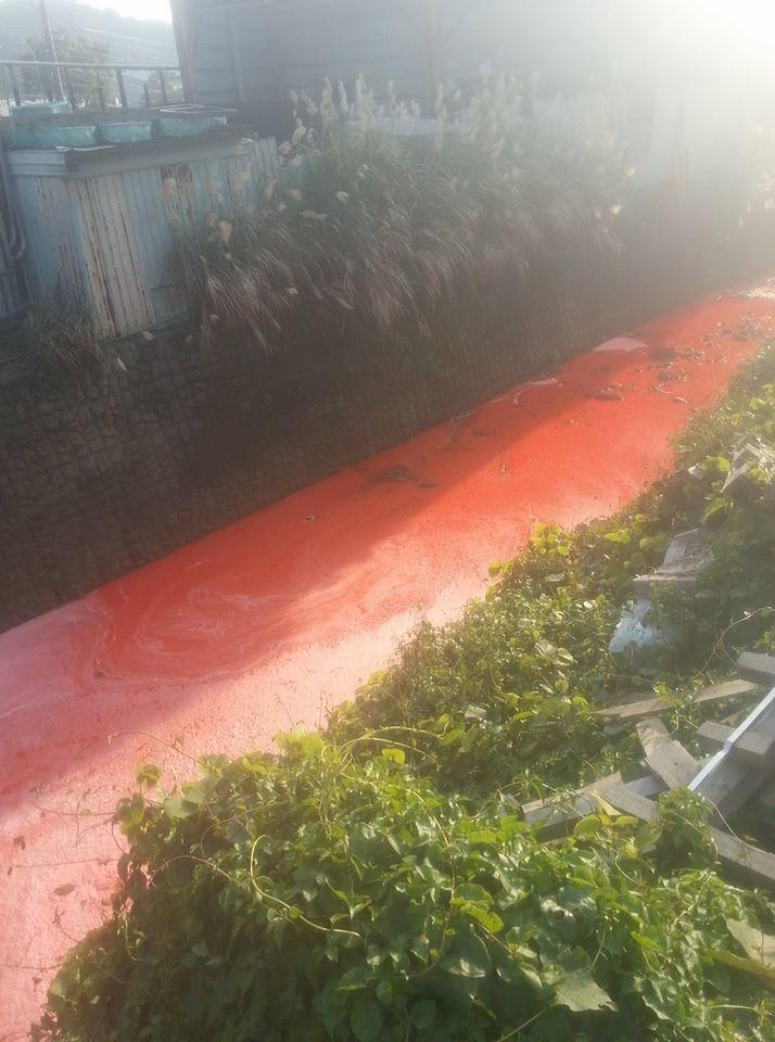 忠義路附近的小溪被染成橘紅,民眾拍下駭人景象直呼缺德。圖/翻攝自臉書「龜山生活通...