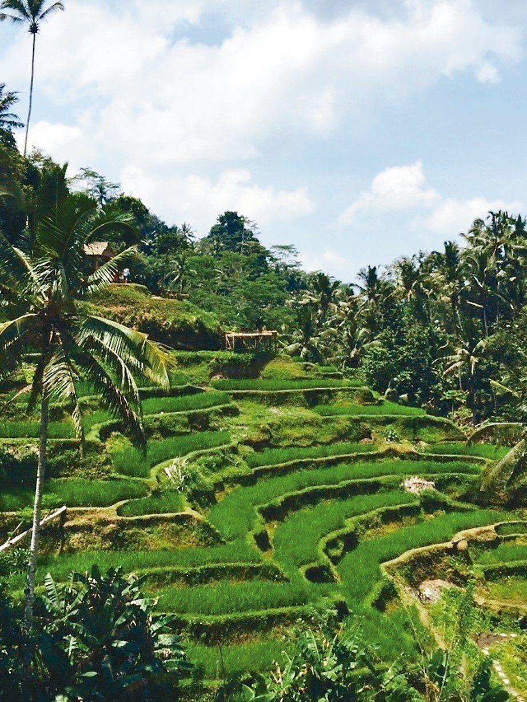 德哥拉朗梯田是峇里島最知名的景點。 記者錢欽青/攝影