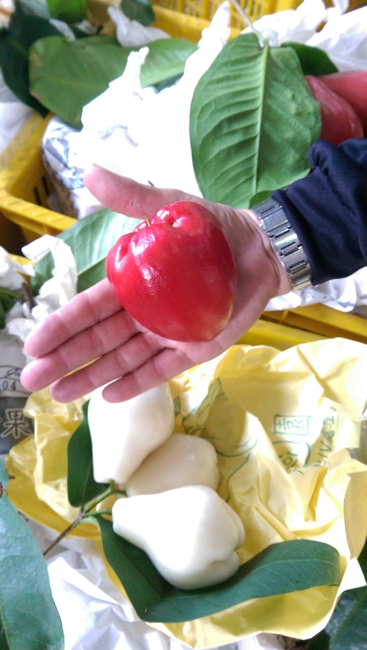 宜蘭代理縣長陳金德說,宜蘭蓮霧比屏東的黑金剛好吃多了,農民還努力研發不同新品種。...