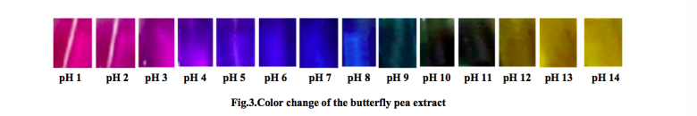 蝶豆花水萃取物在不同pH值下的顏色變化。 圖片提供/食力(來源:Saptarni...