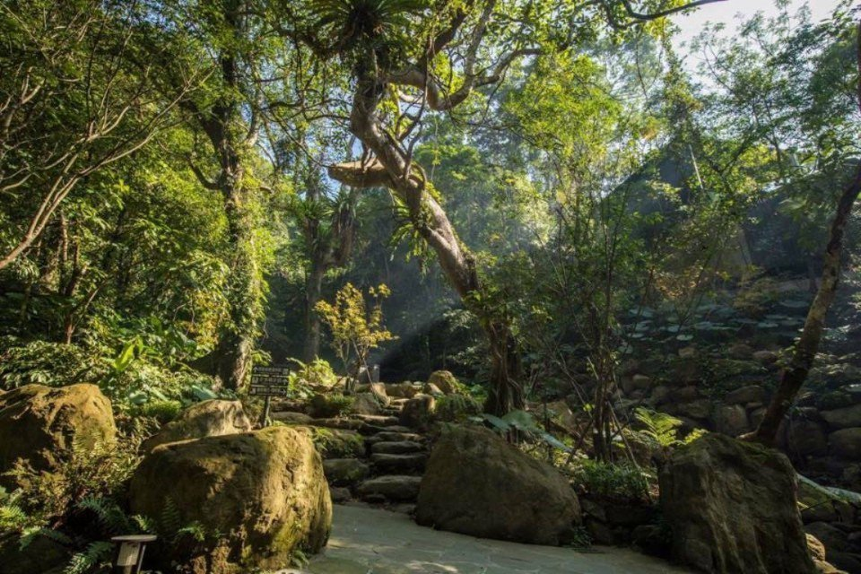 酒店裡有全台唯一僅存的低海拔原生熱帶雨林。(圖片提供/雄獅旅遊)