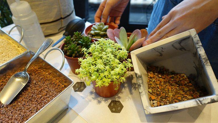 運用各種多肉植物可以自己組盆,增添樂趣。張芳瑜攝影