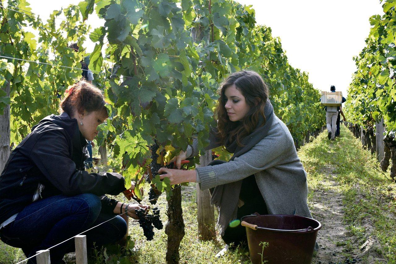 波爾多是法國最大的優質葡萄酒產區。 圖/新華社
