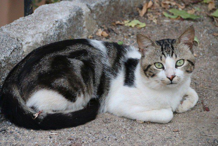 把流浪貓送到動物醫院接受治療後,所產生的醫療費用到底是要由誰來負擔?非新聞事件圖...
