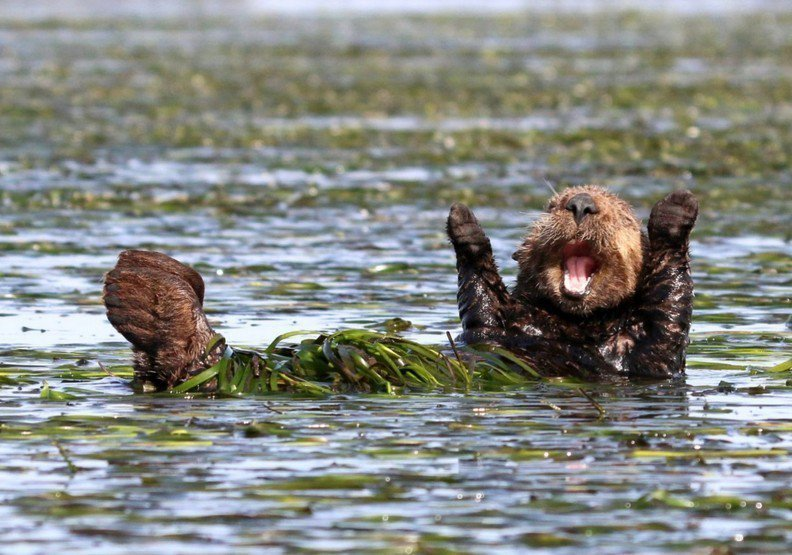 圖擷自comedy wild life photo