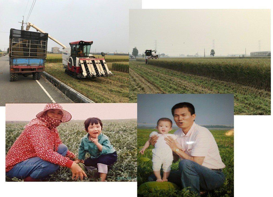 稻米成熟採收期田園與西螺大橋下西瓜田。 竹塘鄉農會/提供