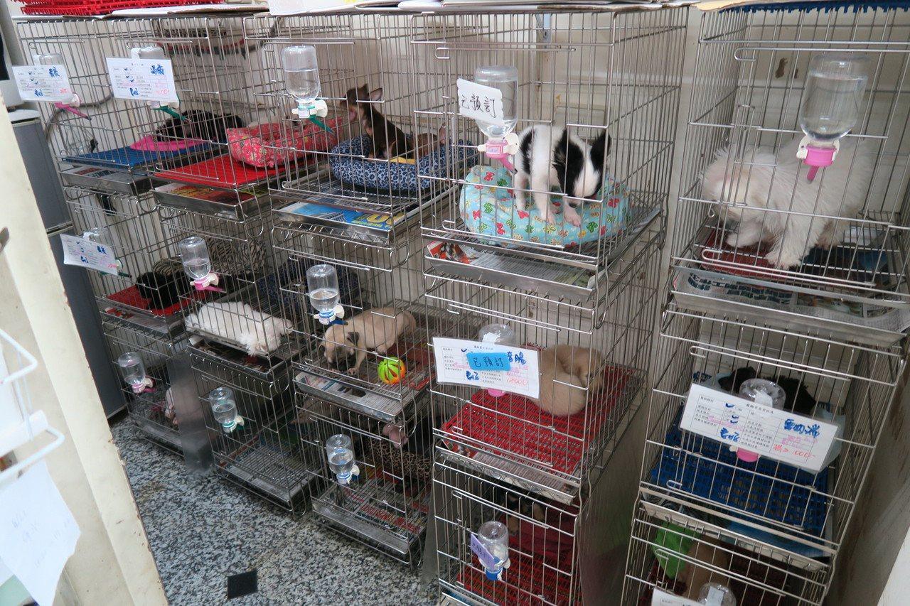 消保官查獲「耀晟寵物坊」現場犬隻數量超過許可。圖/法務局提供