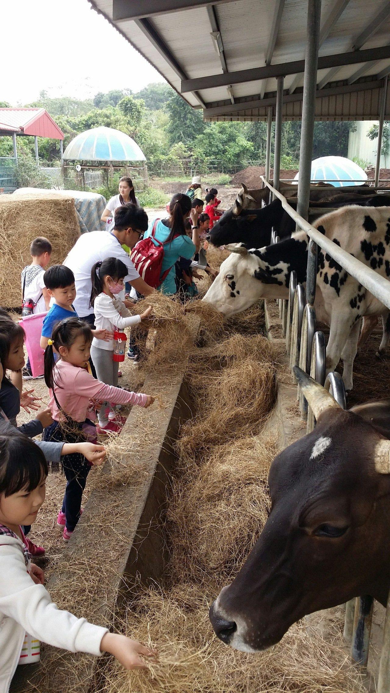 元旦連假將至,園區可愛動物區可提供大小朋友餵食。記者謝進盛/翻攝