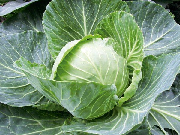 富含植化素的蔬菜 圖/元氣周報