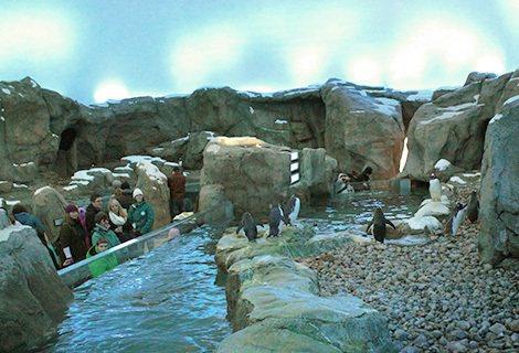加拿大卡加利動物園企鵝。取自加拿大卡加利動物園官網