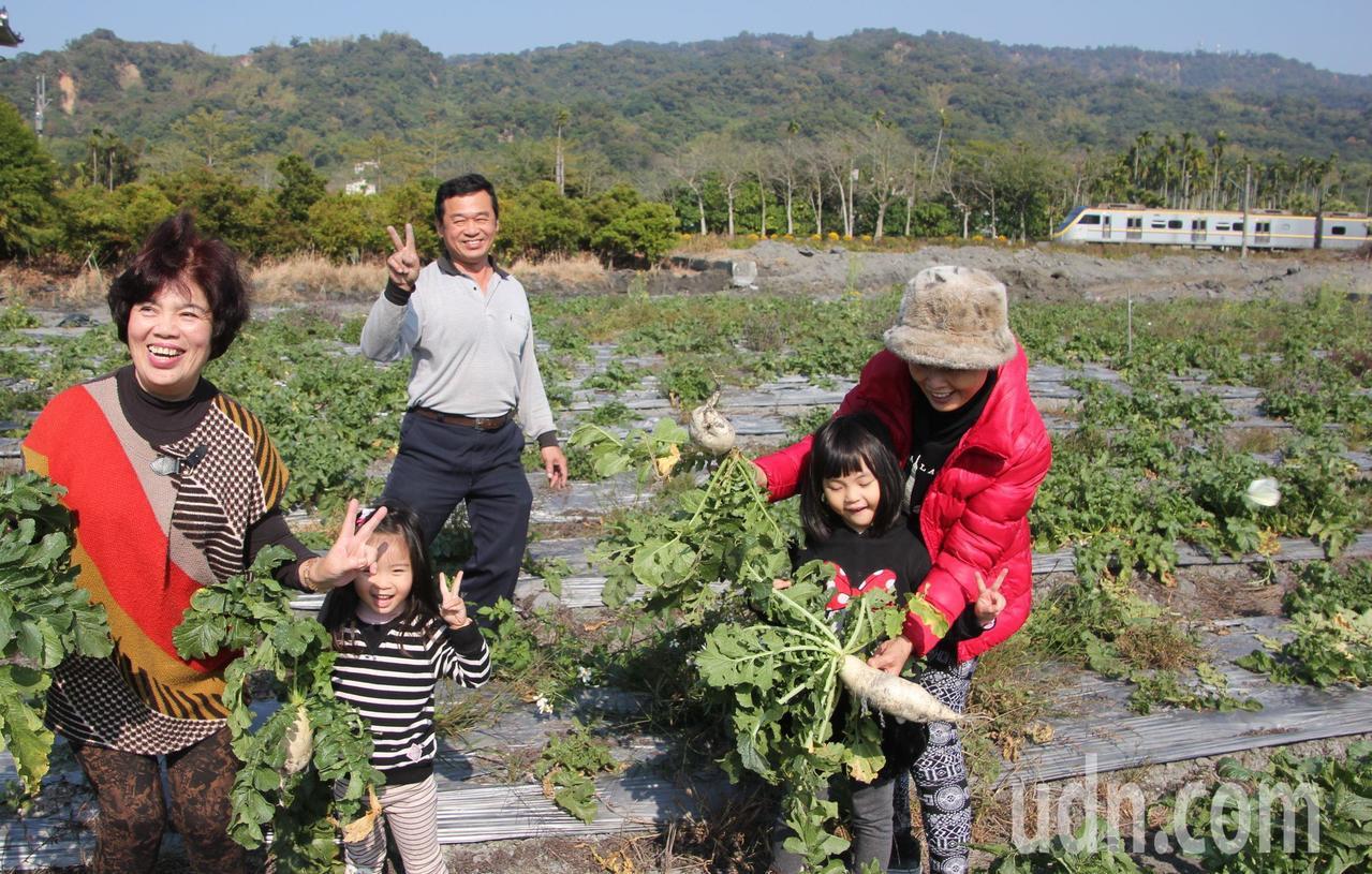元旦假期彰化縣二水鄉農會提供蘿蔔田給大家拔蘿蔔求個好彩頭,民眾也把握假期最後一天...