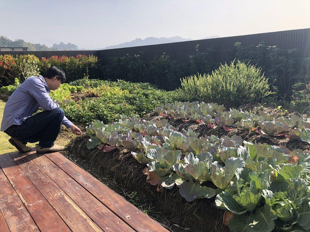 社區為住戶的養生與紓壓需求,設計出獨一無二的空中菜圃、空中水塘與空中花園。記者宋...
