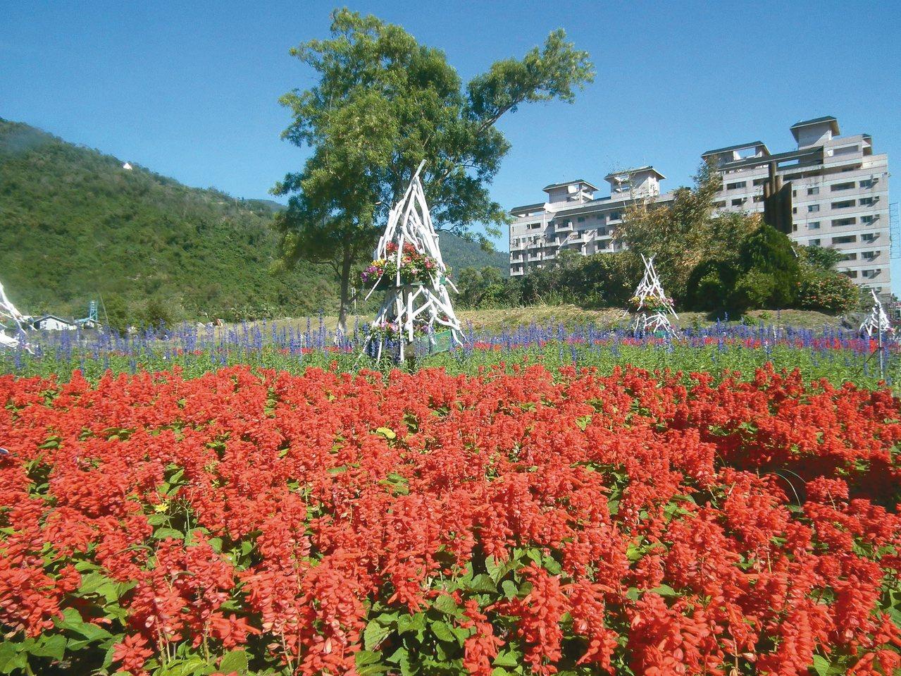 台東縣農會在知本溫泉區開闢1公頃「花海園區」,栽種10多種花卉。 記者尤聰光/攝...