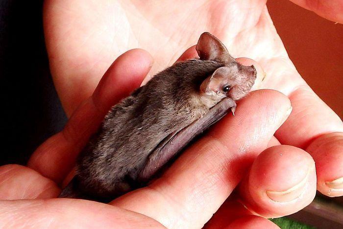 澳洲野生動物信息救援和服務教育組織提供。