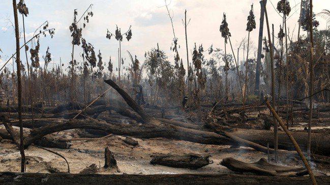 我們對自然世界的破壞,在很多情況下是具毀滅性的,對許多仰賴森林生態系統等自然利益...