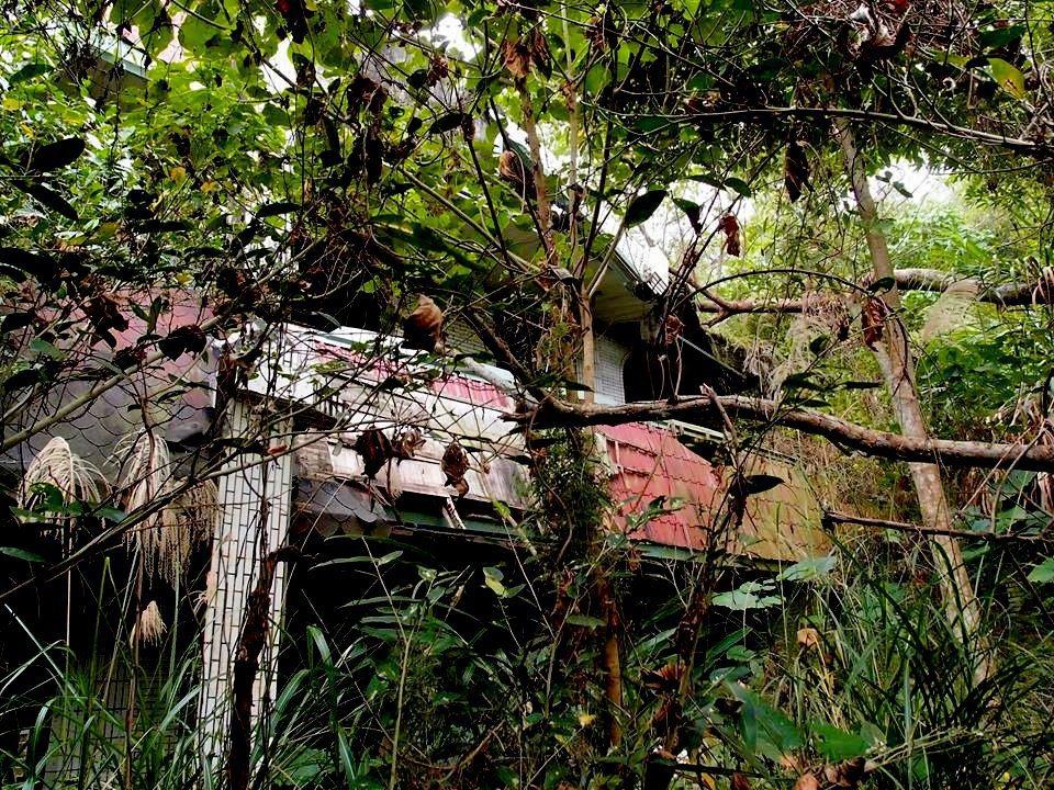 南投縣草屯鎮雙冬花園雙冬花園內屋舍早已傾頹,而多了幾分詭譎。圖/許姓讀者提供
