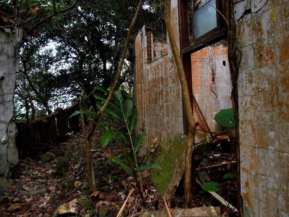 南投縣草屯鎮雙冬花園建築和走道被落葉、枯木或樹根佔據,現場荒涼。圖/許姓讀者提供