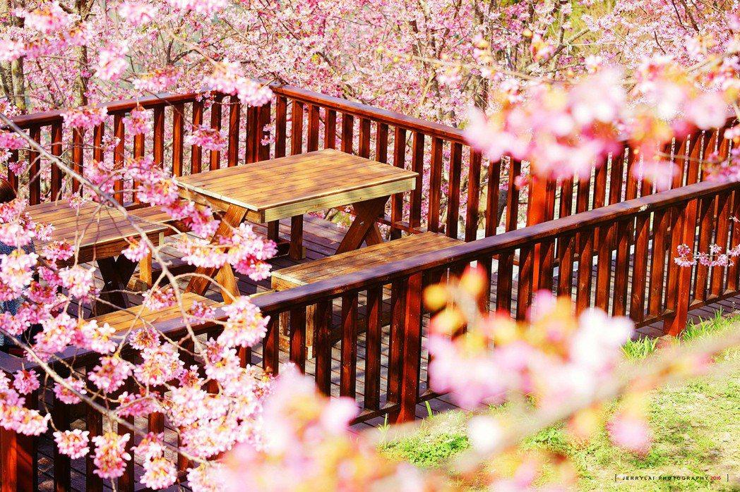 ▲櫻花樹下野餐。(圖/攝影者:Jerry Lai, Flickr CC Lice...