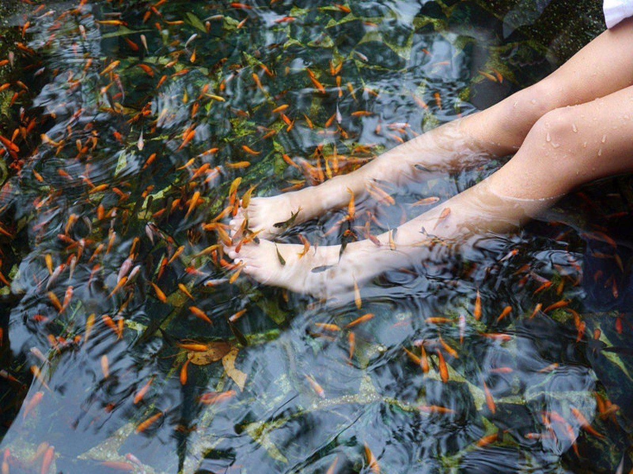 大小朋友喜愛的親親魚池。圖/統一谷關溫泉養生會館提供