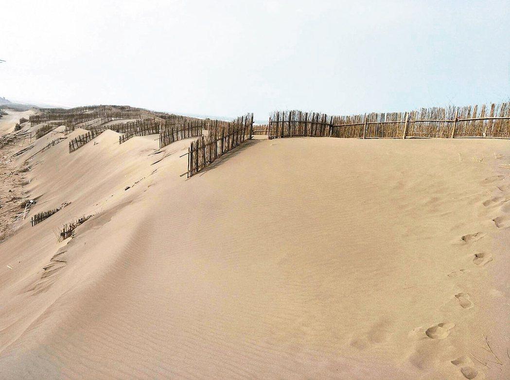 桃園市觀音草漯沙丘在堆沙籬攔下外海漂沙堆疊而成,宛如小型「沙哈拉沙漠」,吸引許多...
