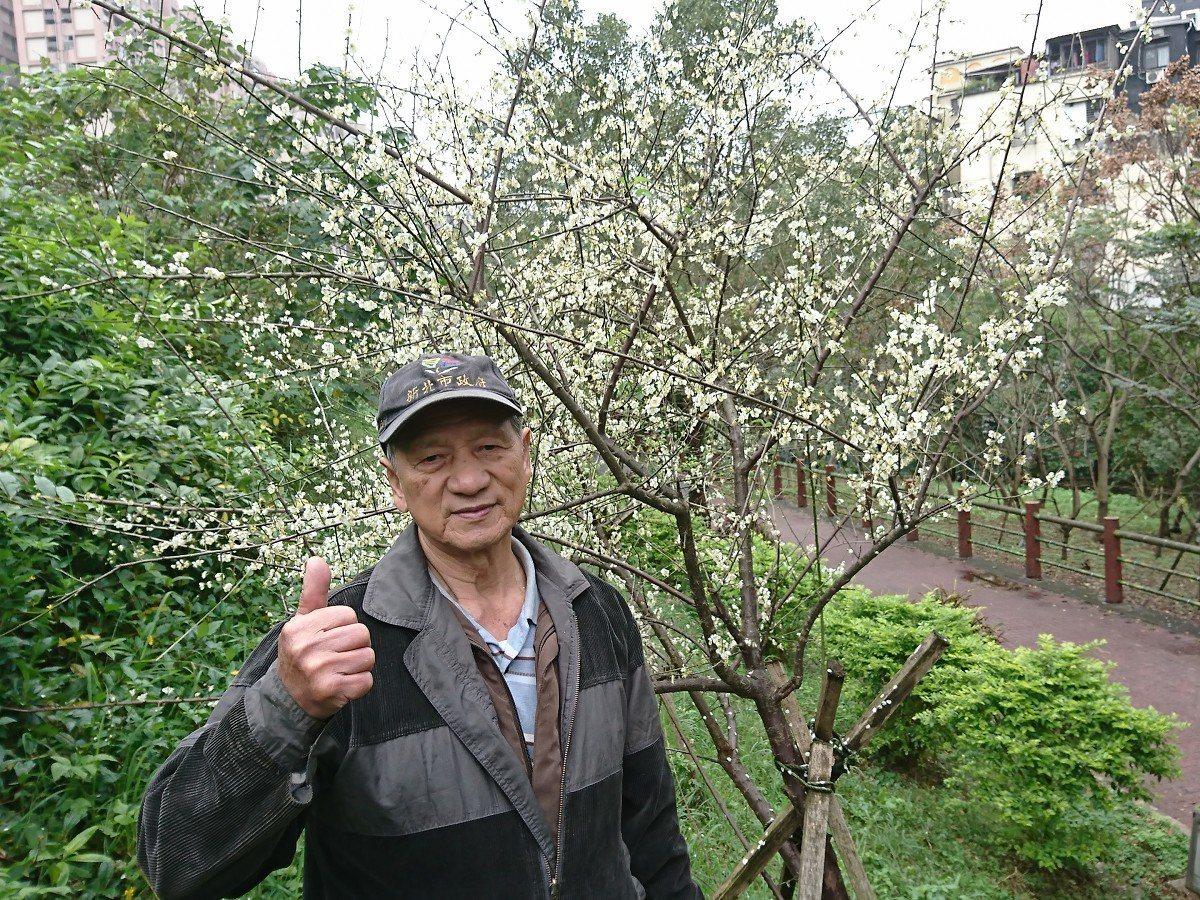 汐止禮門里長李朝發種了幾十幾棵的梅花,目前都在盛開中,要賞花的民眾,可得快。 圖...