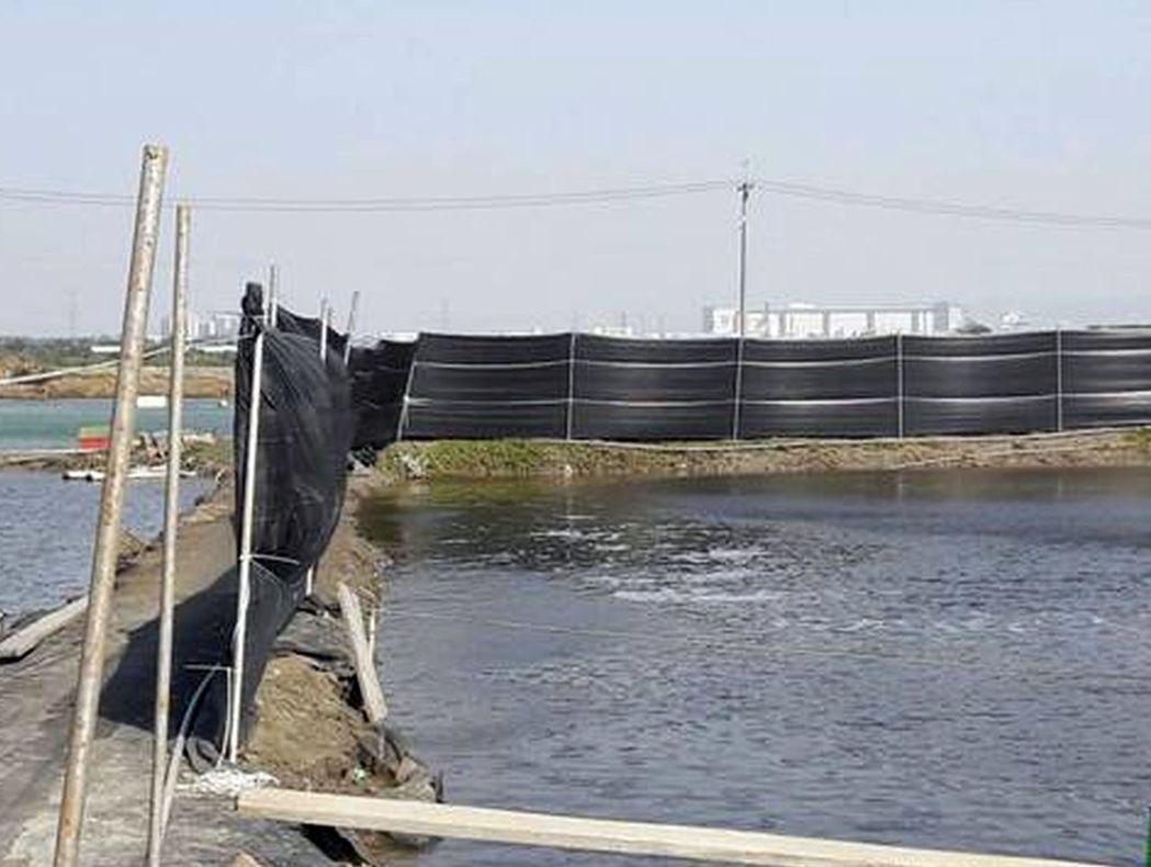 今年一月最強寒流來襲,高雄永安地區漁塭都架起防風棚,預防寒害。 記者王昭月/攝影