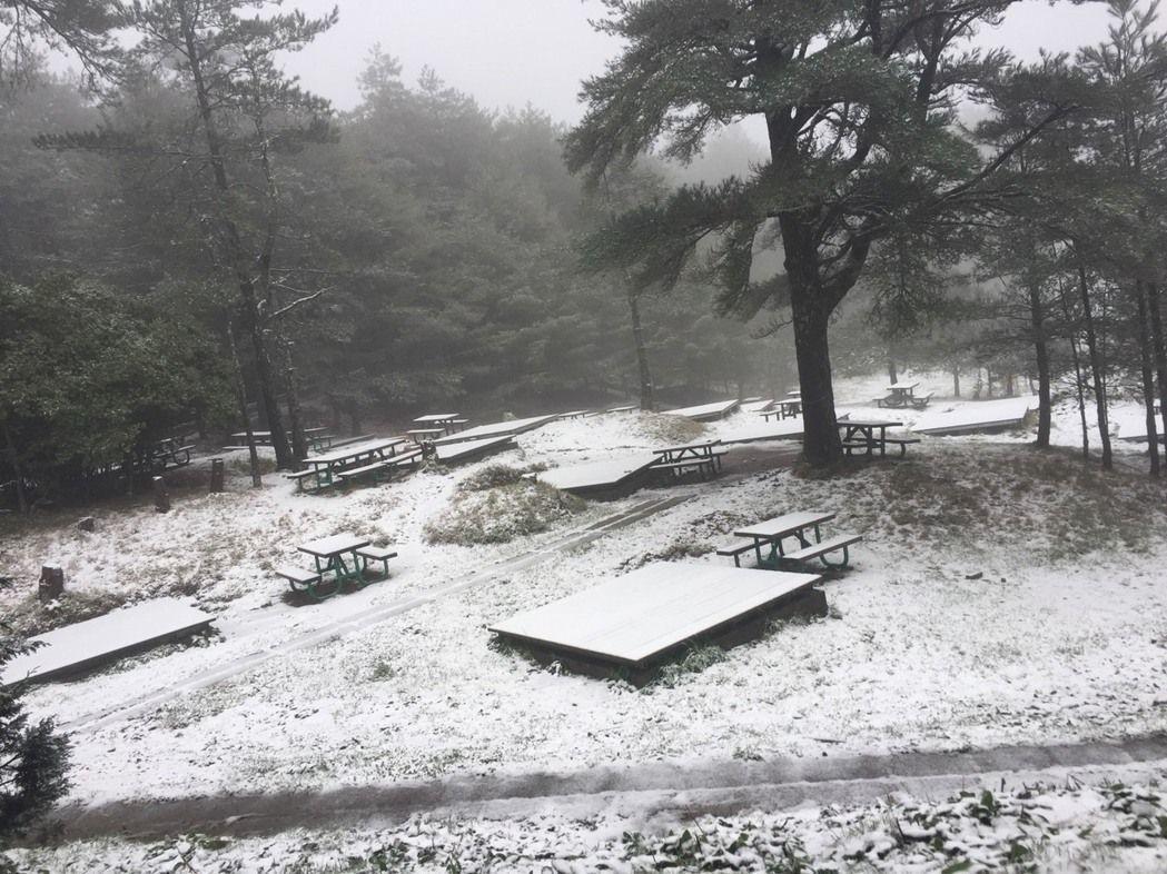 福壽山農場也下雪了,露營區有如雪國森林,十分壯觀。 圖/朱強森先生提供