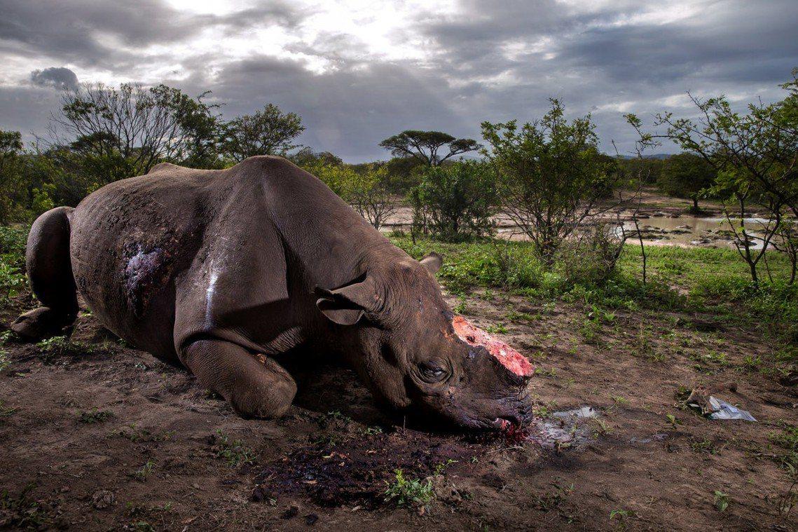 是誰殺了環境運動者?這些加害者,或許跟盜獵犀牛角、非法伐木者是同一批人,也或許是...
