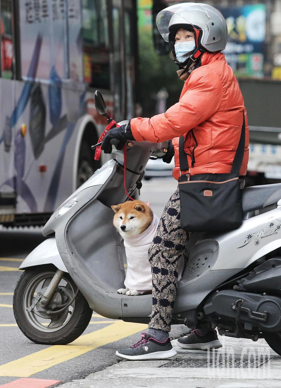 民眾帶著毛小孩出門,不忘給愛犬穿上衣服保暖。記者鄭清元/攝影