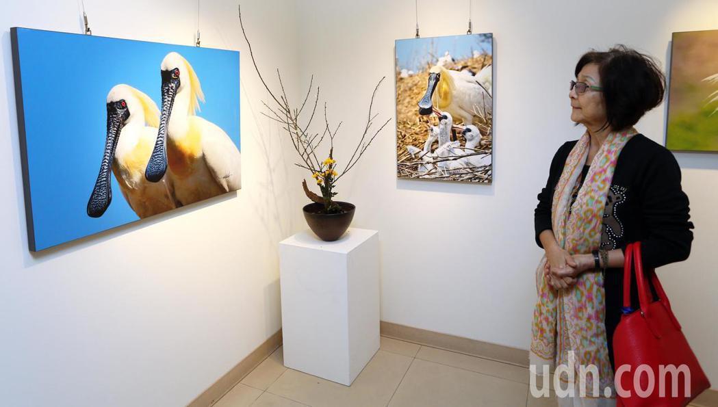 黑琵家族攝影俱樂部成員張順雄、王徵吉在高雄文化中心展出「水舞黑琵-黑面琵鷺攝影展...