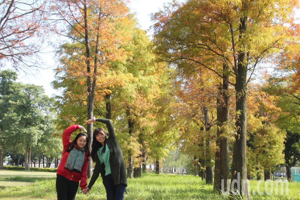 明道大學蠡澤湖畔的落羽松樹林最近剛轉紅,不僅學生喜歡去拍照,假日也有遊客會來賞景...