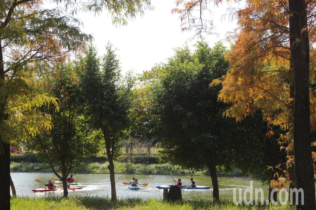 明道大學落羽松樹林就在蠡澤湖畔,常可以看到休閒保健系學生正在練獨木舟。記者林宛諭...