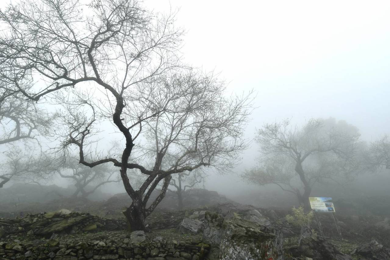 高雄六龜寶來梅林區一片雪白,彷彿進入國畫世界。記者謝梅芬/翻攝