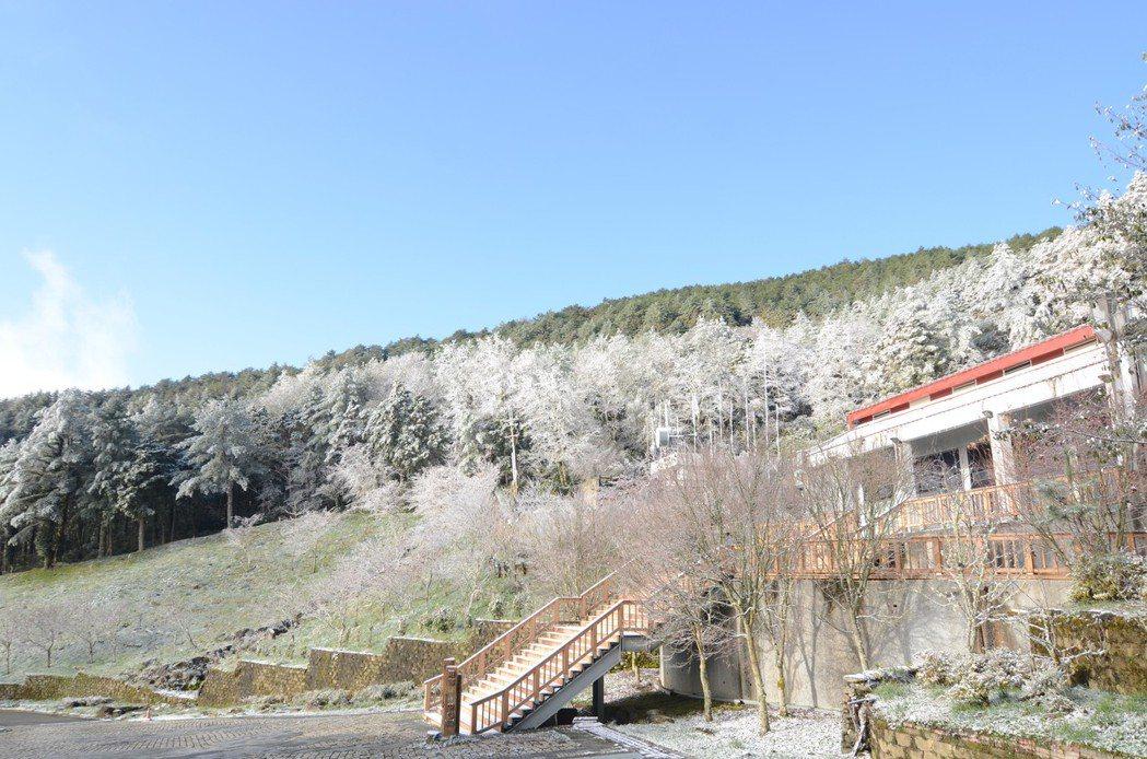 十一日向陽山區一度大雪紛飛,昨天台東林管處向陽森林遊樂區遊客中心建物及周邊林木覆...