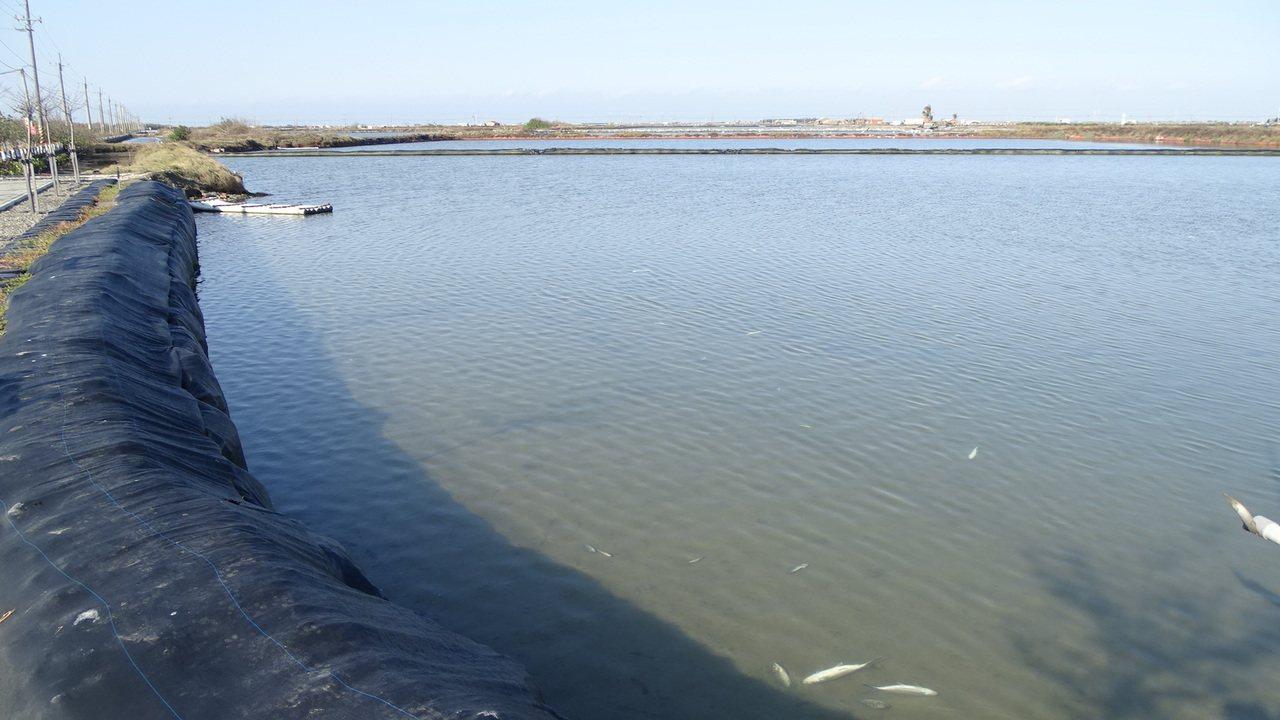 淺棚式虱目魚塭,災情估計上達9成。記者謝進盛/攝影
