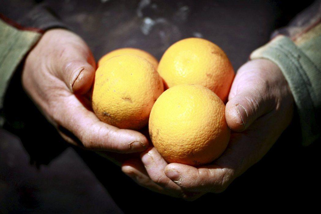 澳洲農民手持柑橘。路透
