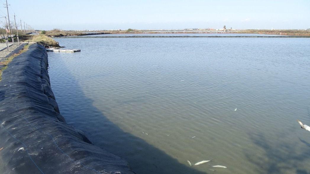 台南七股淺棚式虱目魚塭,災情估計上達9成。記者謝進盛/攝影