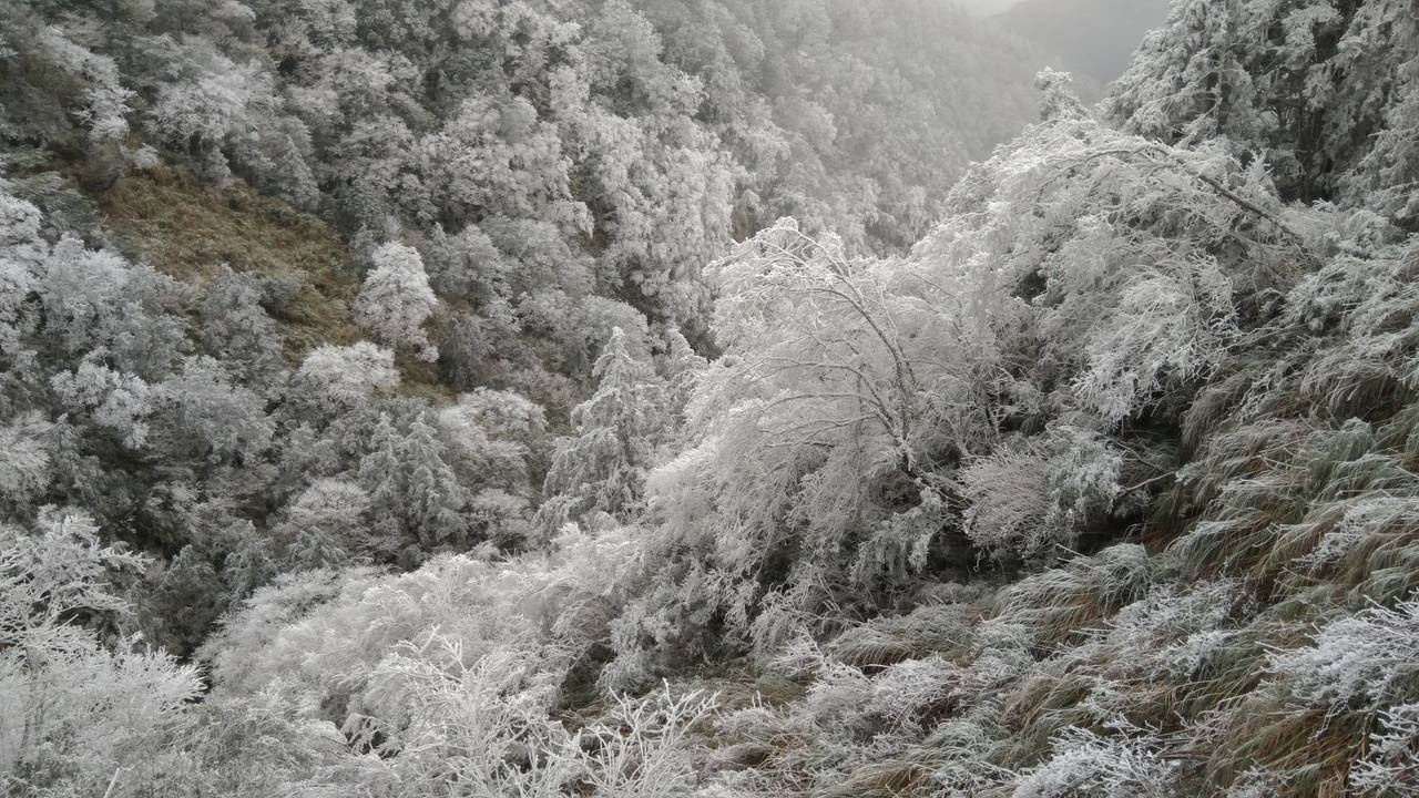 太平山今天仍是一片白色世界,美景如畫。圖/林務局羅東林區管理處提供