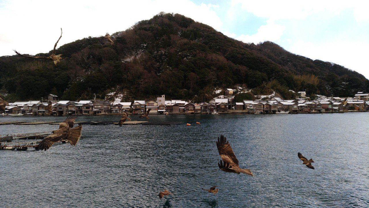 搭伊根遊覽船,從海上眺望舟屋,還可以欣賞老鷹。記者楊德宜/攝影