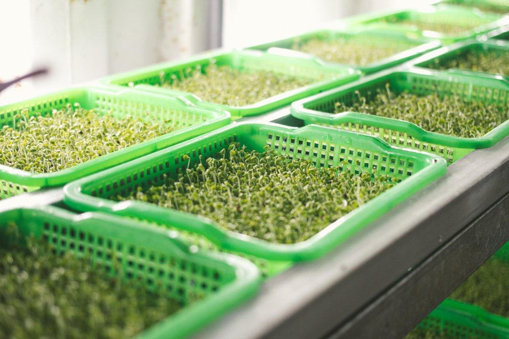 生鮮芽菜、清潔保養品等共16項 記者程宜華/攝影