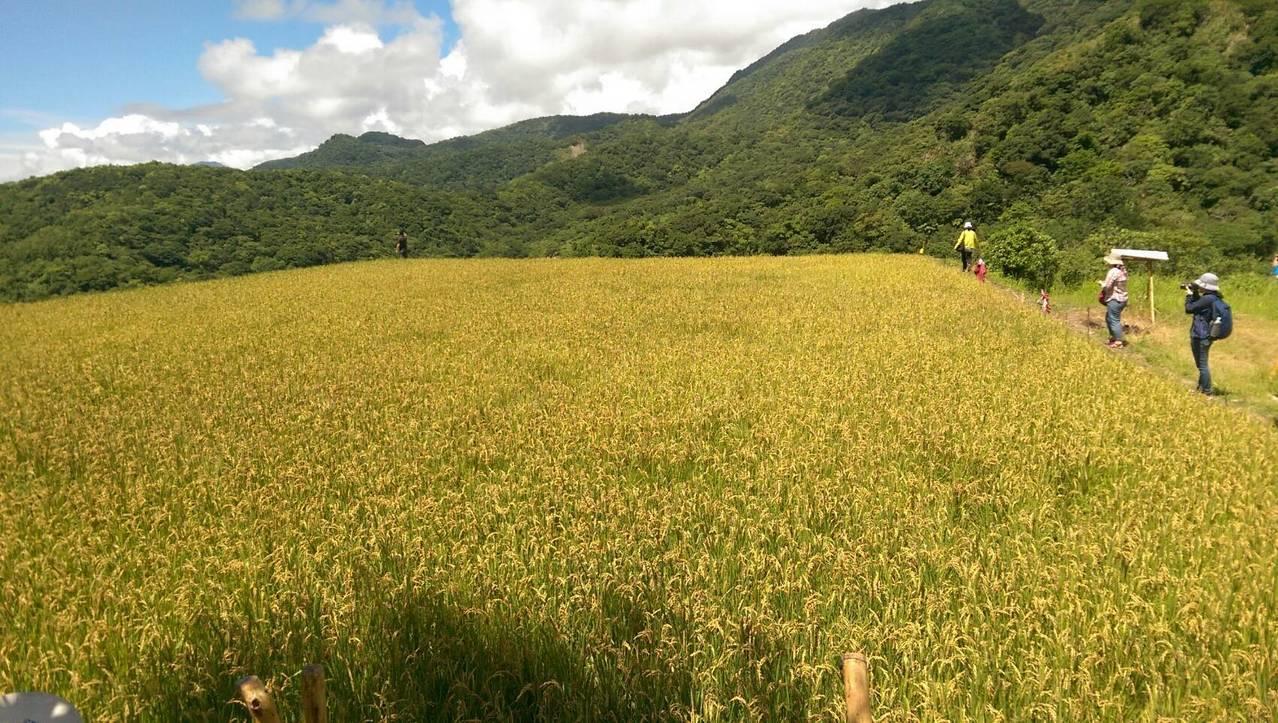守護農地,不只是守護糧食安全也讓環境永續。圖/聯合報系資料照片