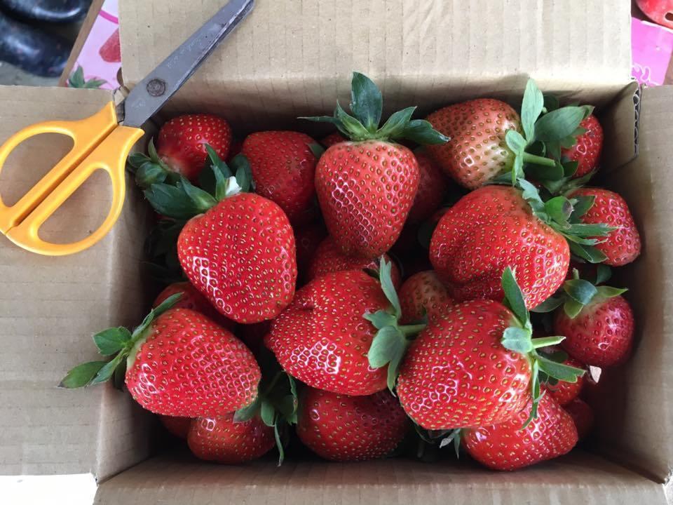 鐵定特大草莓園 FB